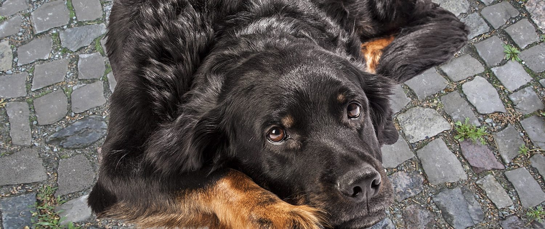 Foto eines Hundes
